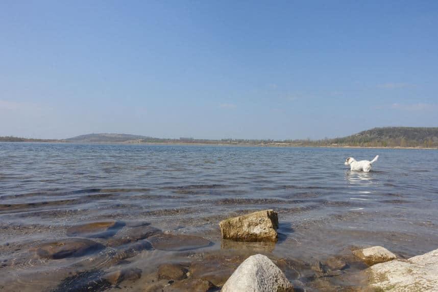 Ausblick aufs Wasser mit Hund