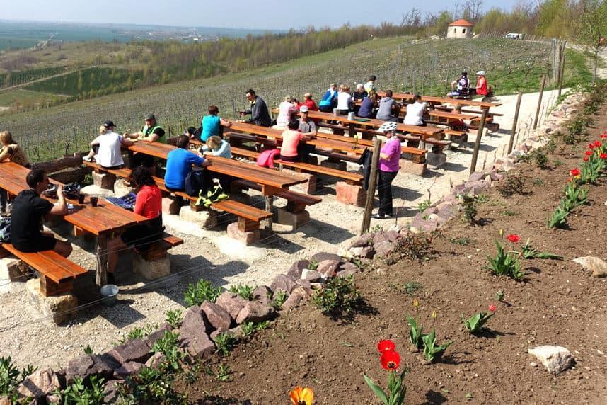 Weinverkostung am Geiseltalsee Freyburg