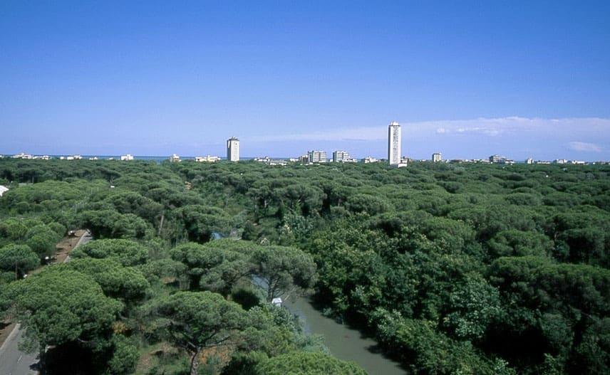 Ausblick über den Pinienwald