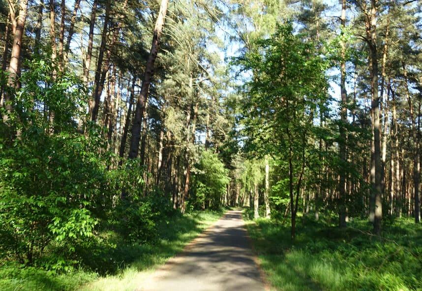 Waldstück auf Usedom